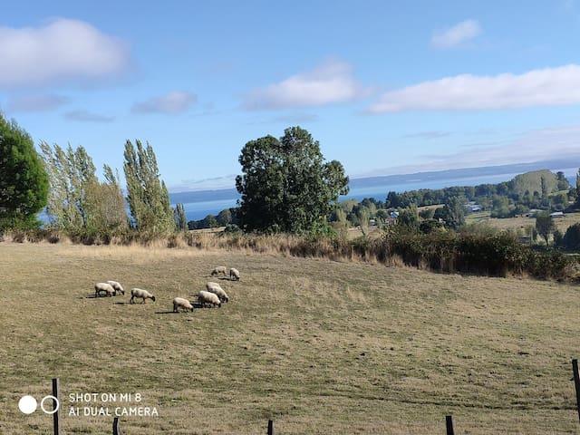 Casa en  Patagonia chilena frente al  lago Ranco