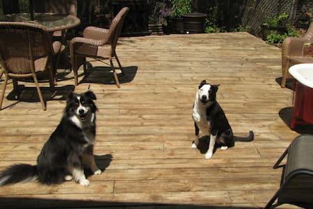 RoseMount Manor Pet friendly Cabin - Murphy