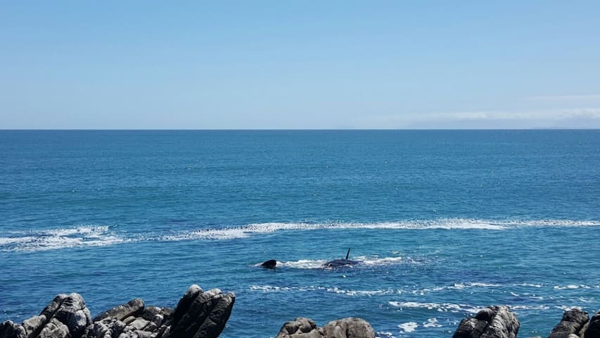 Whale cove Self Catering Apartment