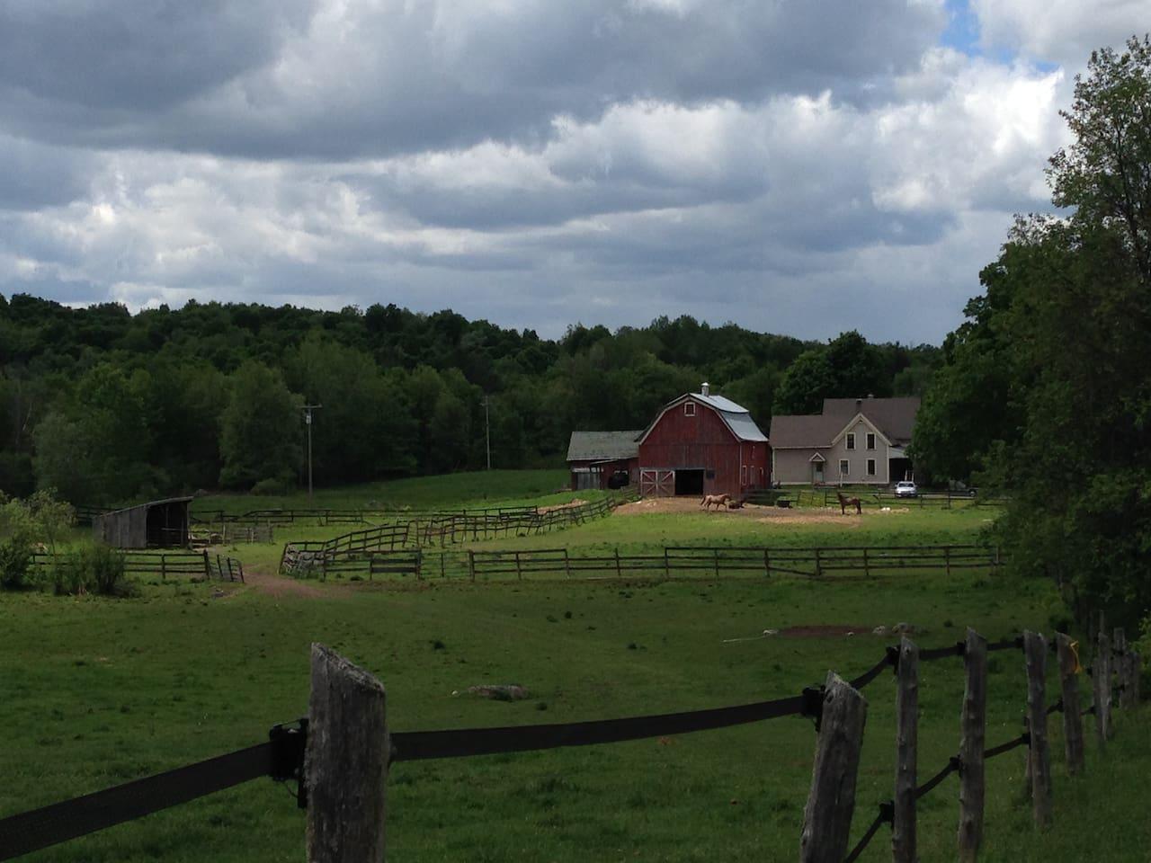 Summer at The Farm