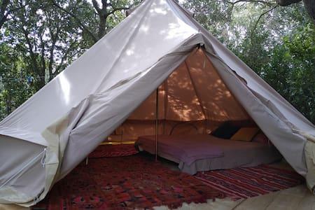 Nuitée sous tentes sahariennes