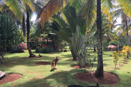 Ecolodge near Playa Rincon in Samana