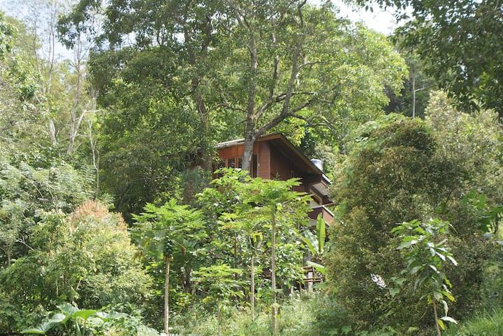 Candlenut Treehouse Treehouses For Rent In Kota Tomohon Sulawesi Utara Indonesia