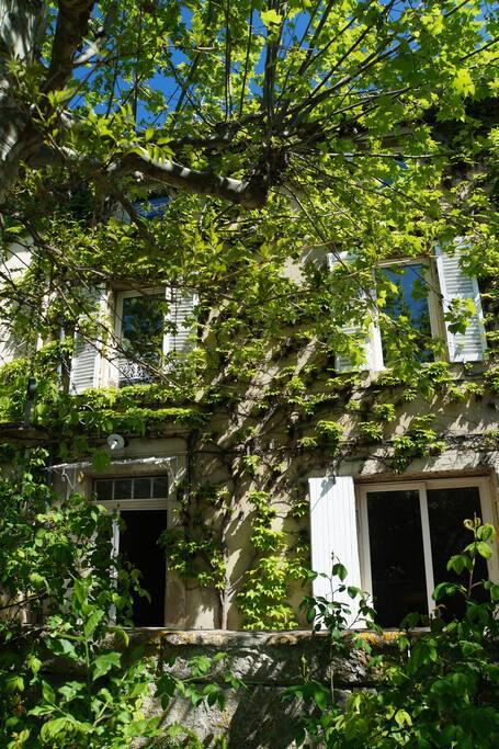 Maison ancienne avec beaucoup de charme, recouverte de vigne vierge. terrasse ombragée