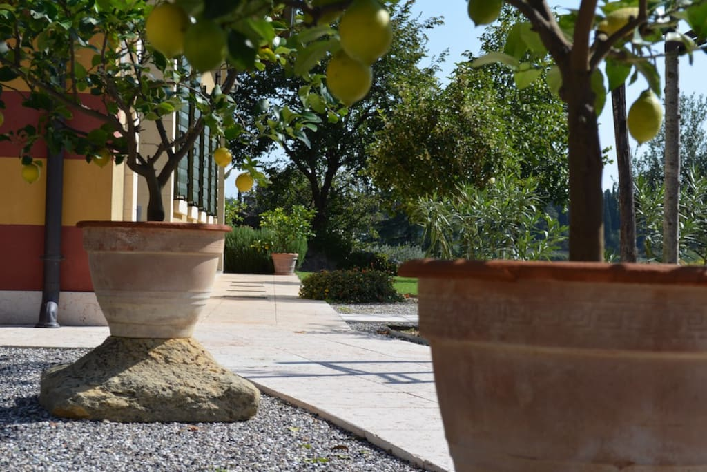 Particolare giardino Agriturismo Sommavalle
