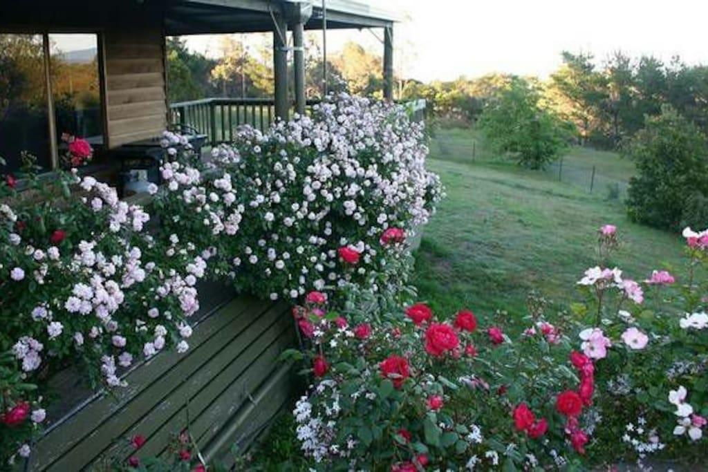 Verandah in spring