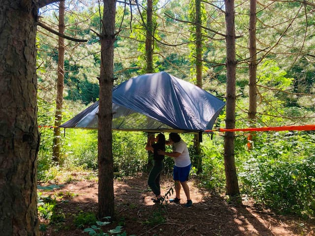 "Camp SkyTent: ""Jack Pines"""