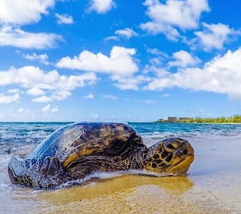 Luxury Turtle Bay Golf Course Condo - Kahuku
