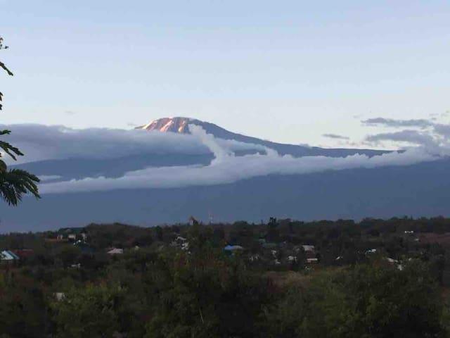The kilimanjaro Mountain View bear my house