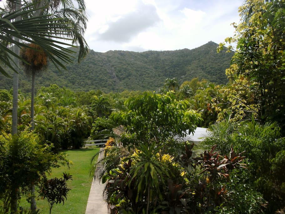 Enjoy the view, the beautiful tropical gardens and lush green lawns..