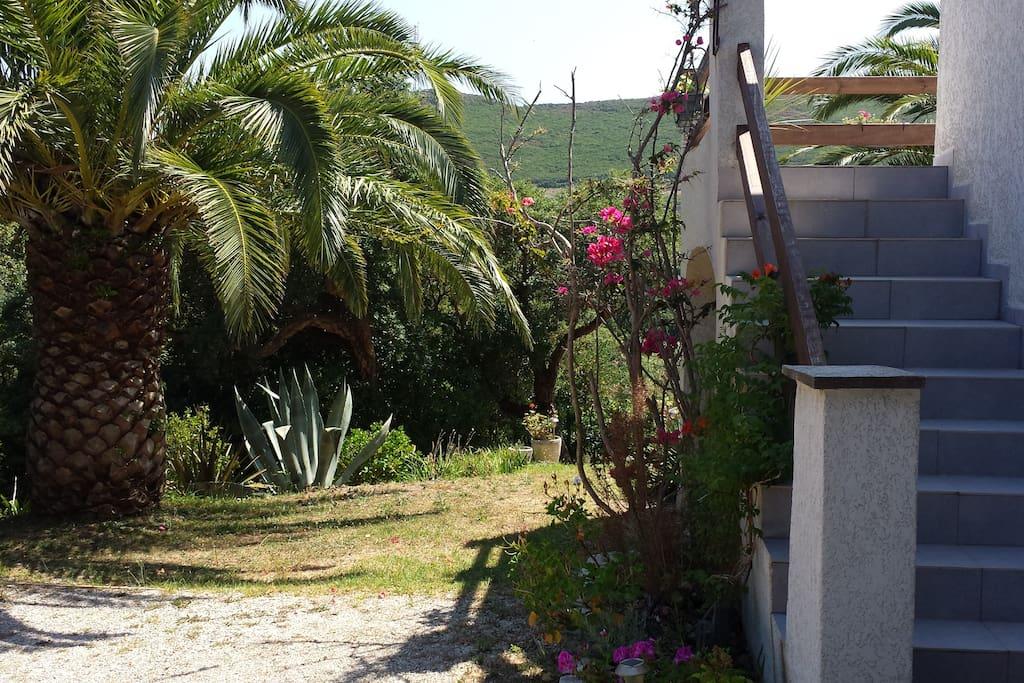 L'entrée et jardin