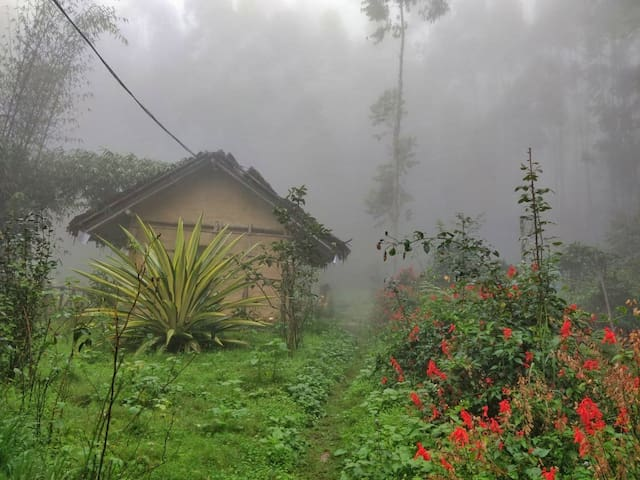 FARM HOUSE SURROUNDED BY SHOLA FOREST