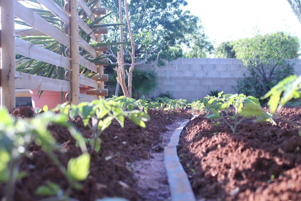 Seguiteci sui Social @Dag Home Holiday #daghomeholiday #farmtotable #workinprogress