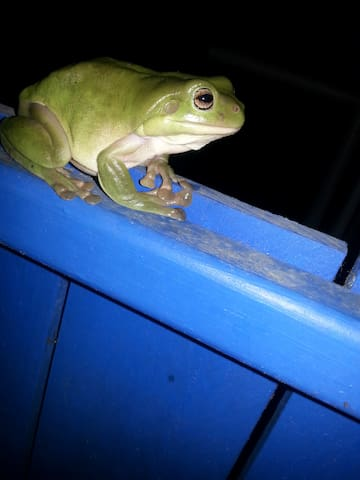 local resident.  They come out at night, mostly.