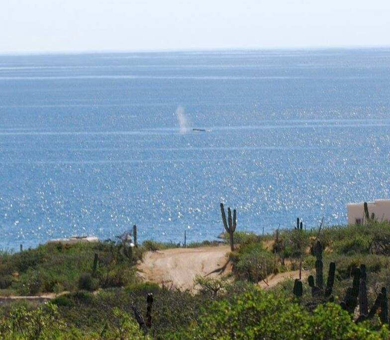 Whales are often seen during Jan, Feb and March. This photo was taken from the bluff five minutes walk from the trailer.