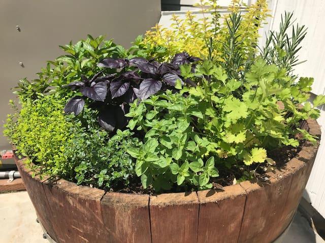 This summer I added an herb garden.