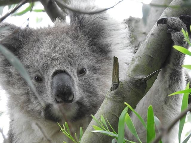 Koala's garden