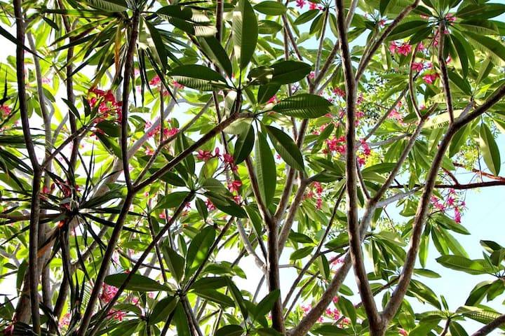 Tropical Tavernier Home - Tavernier - Casa