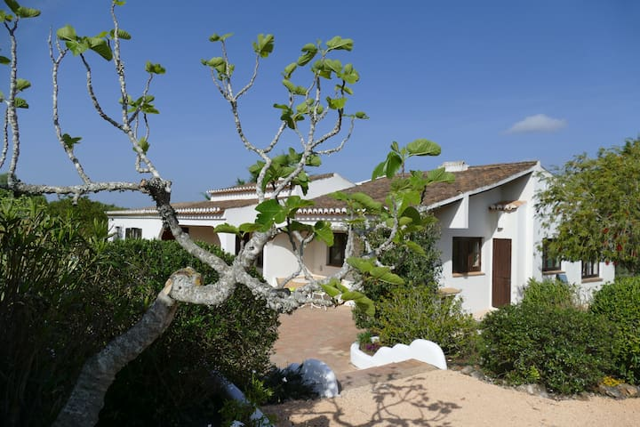 Quinta en algarve - Faro District - Casa