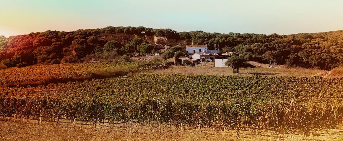 Casa vacanze - Province of Olbia-Tempio - Casa