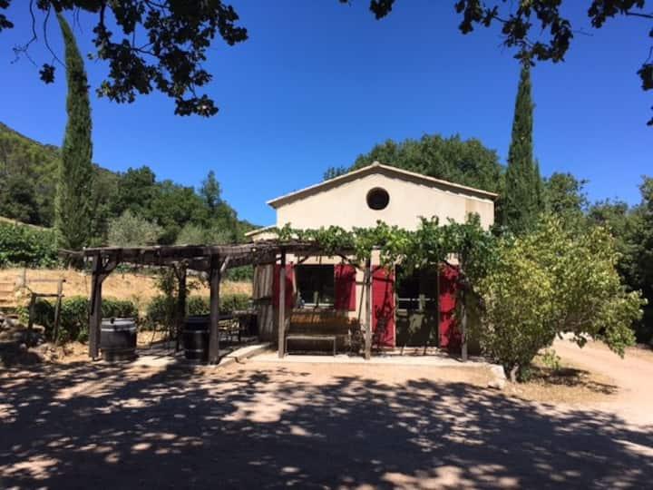 A bastidon in a vineyard in Provence