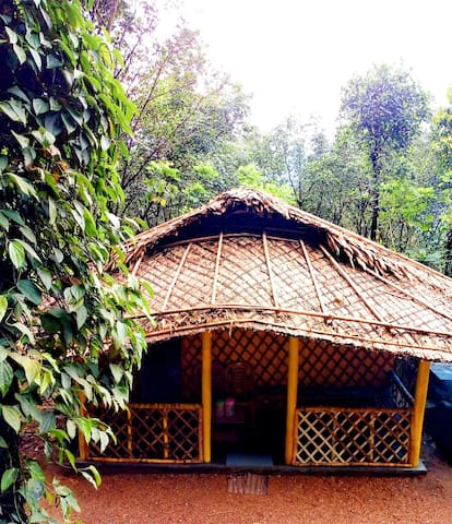 Bamboo Hut Munnar - Fully Surrounded by forest