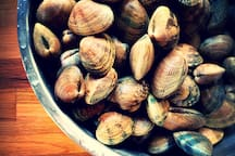 Out There - harvest your own clams fresh from the beach.