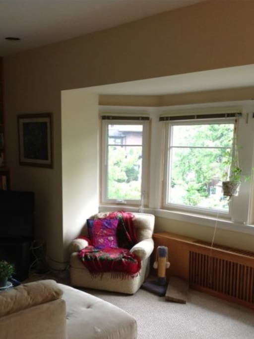 Lots of natural light in the living room