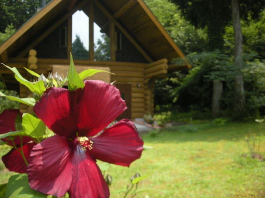 ログハウスと夏の庭