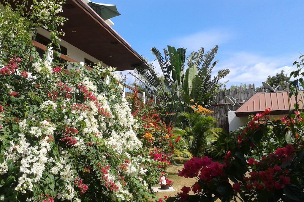 Apartment For Rent In Bohol