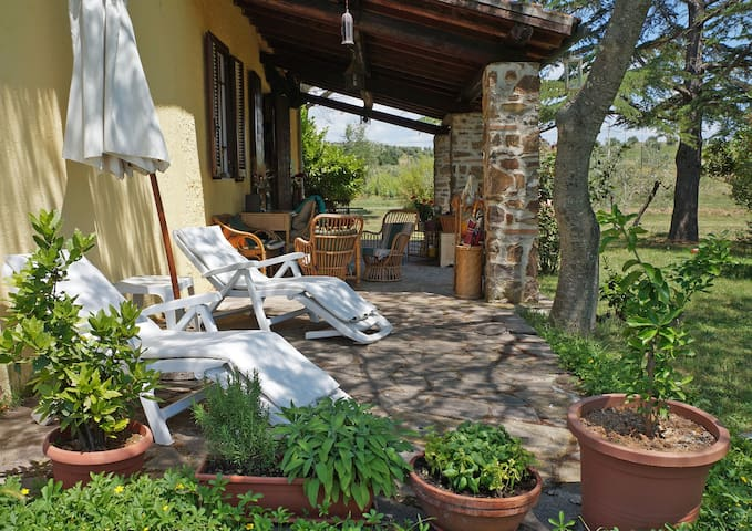 Single farm in the countryside 4+2 - Massa Marittima