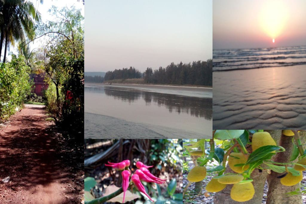 Breathtaking surrounding, serene beach, beautiful fauna and jackfruit laden trees!