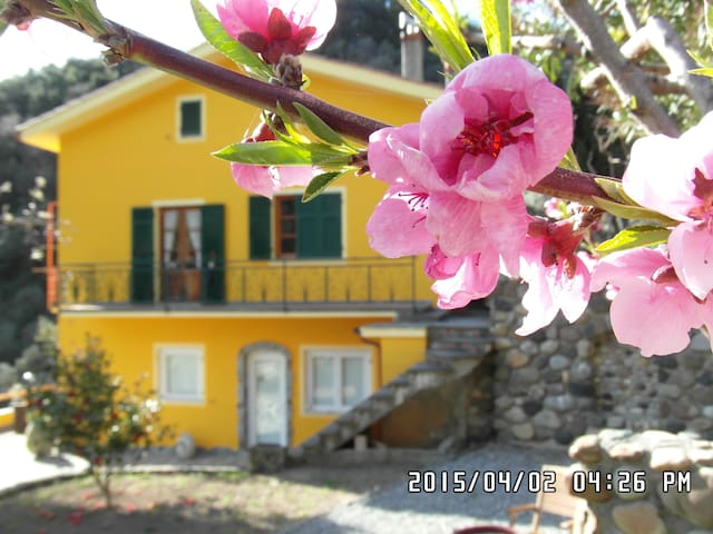 camera vermentino - Vernazza - Bed & Breakfast