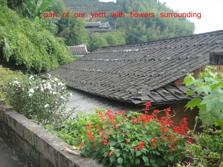flowers on our front yard,neighbour's house and roof. 一楼院子一角,姐姐和我种的花草。