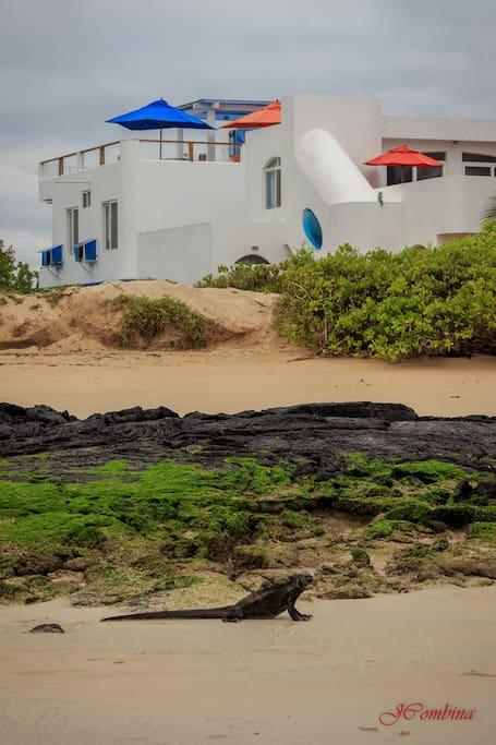 Drake Inn from the beach
