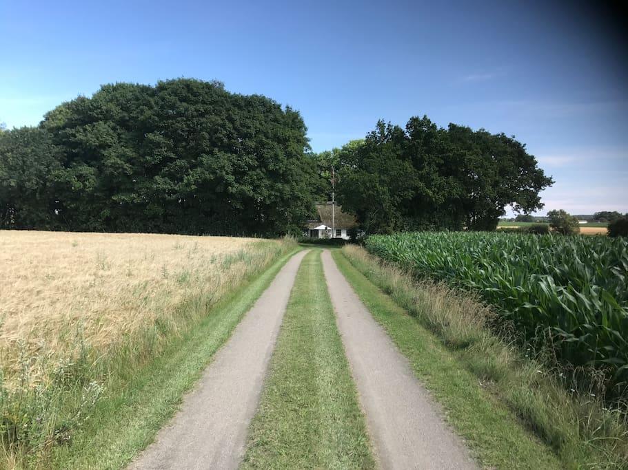 Ejendommen ligger 300 meter nede af en markvej.