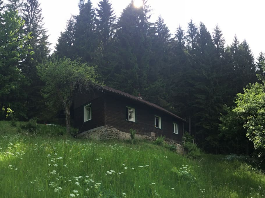 Das Waldhaus / The House in the Woods