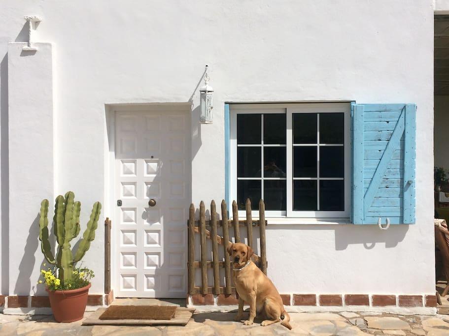 Nuestro perro Guero