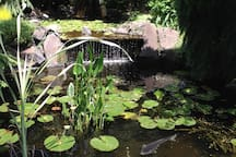 The pond with four Koi and many goldfish. You can listen to the waterfall from the back deck.