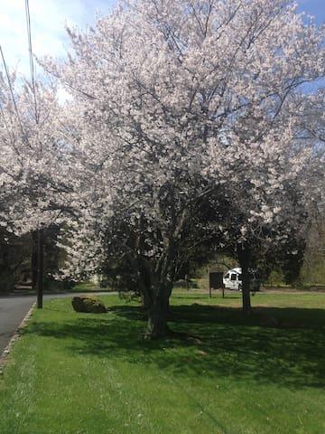 Longwood Gardens, Brandywine Museum