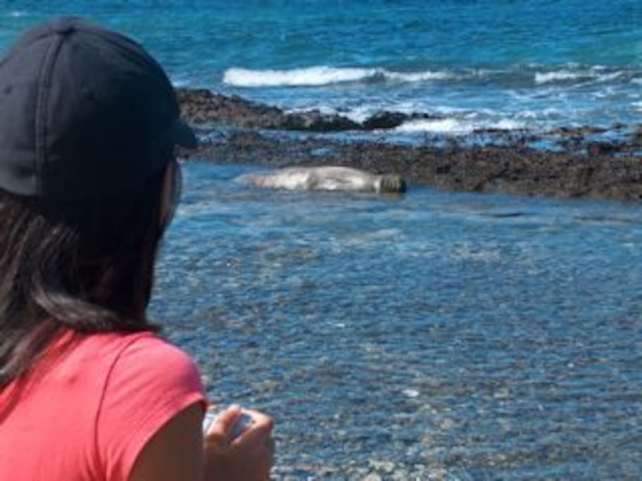 love our monk seal visits...
