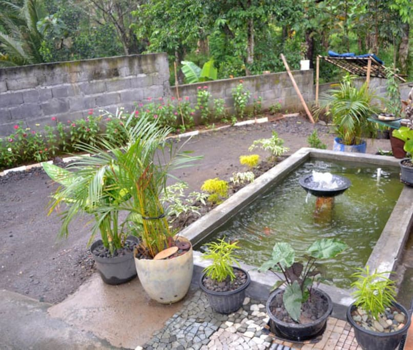 Fish pond in front of home stay ( kolam ikan di beranda rumah )