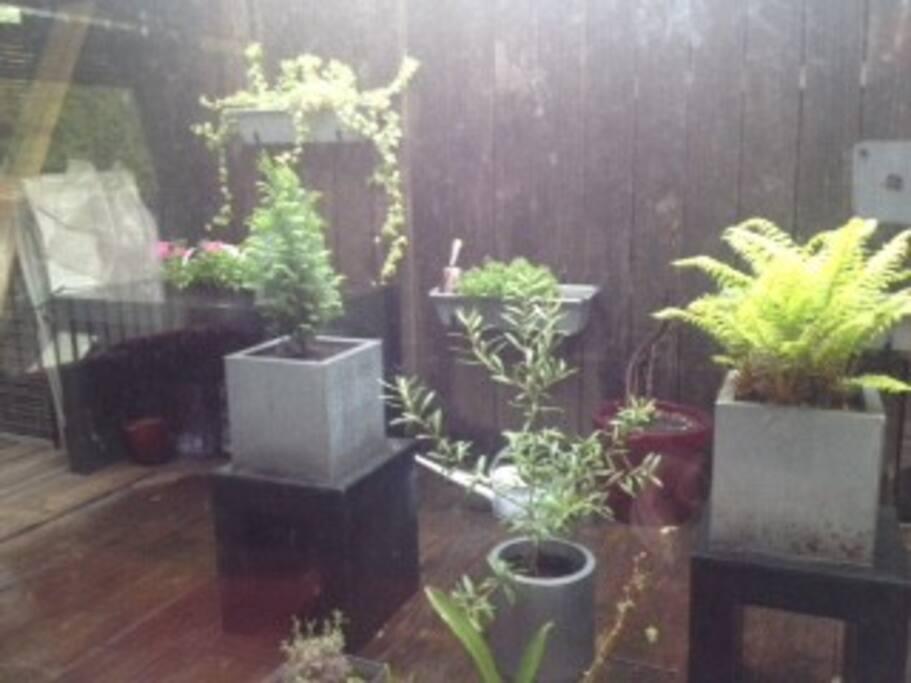 Terrasse verdoyante
