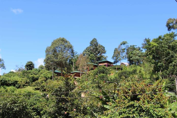 Peng's Tea Garden - Mae Taeng - ที่พักพร้อมอาหารเช้า