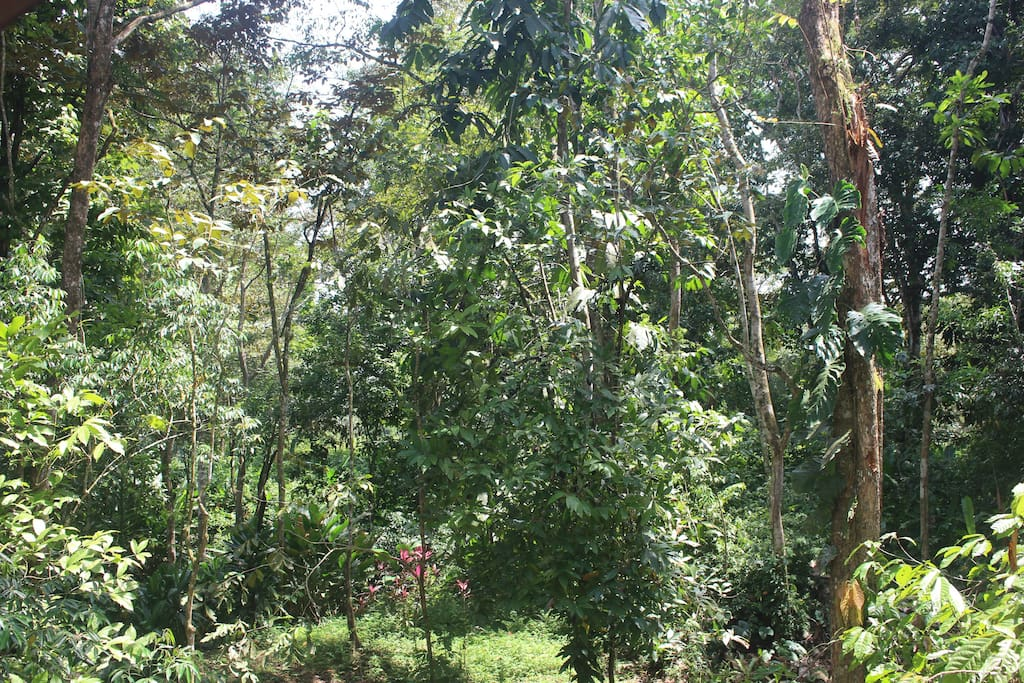 View of the tropical forest from the windows