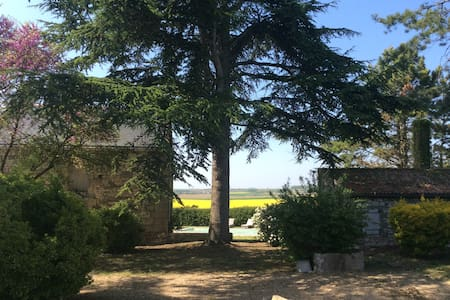House with charm in the vineyard - Les Verchers-sur-Layon - House
