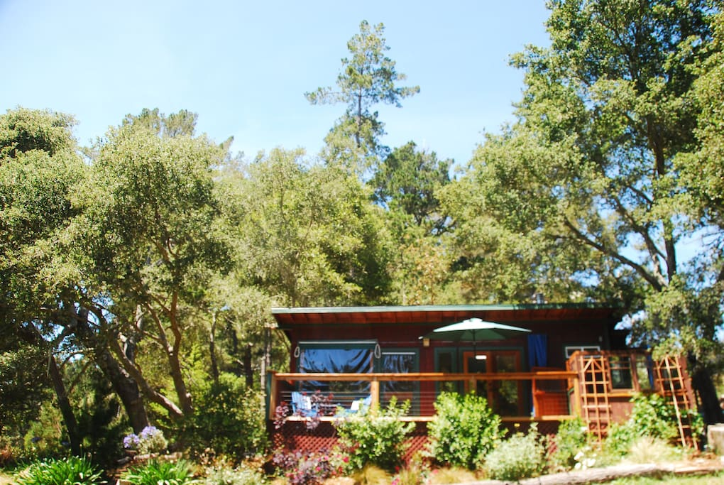View of the cabin nestled beneath the oak trees