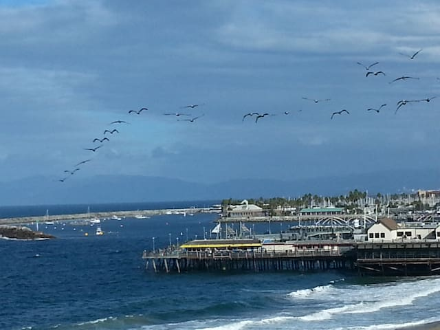Watch pelicans on the wing passing the majestic Redondo pier with great restaurants, bars, shops.