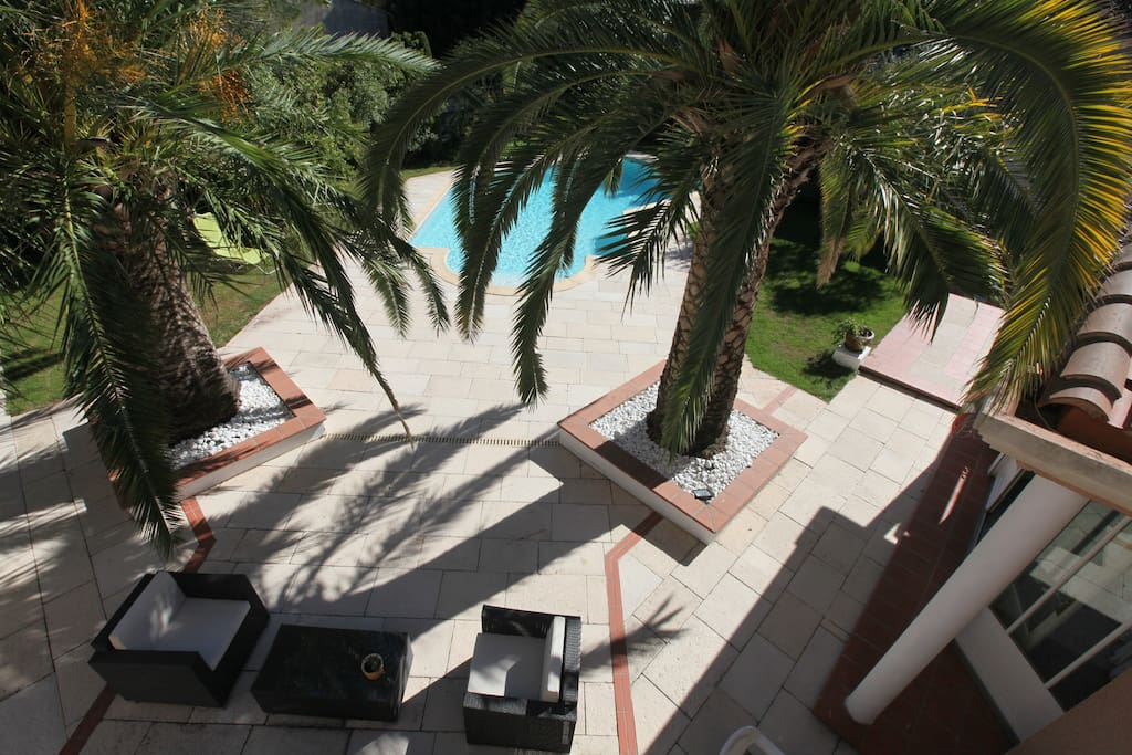 Partial view of the garden with Phoenix palms