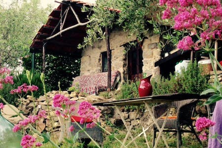 Eco rustico on tranquil olive grove - Ceriana - Hut